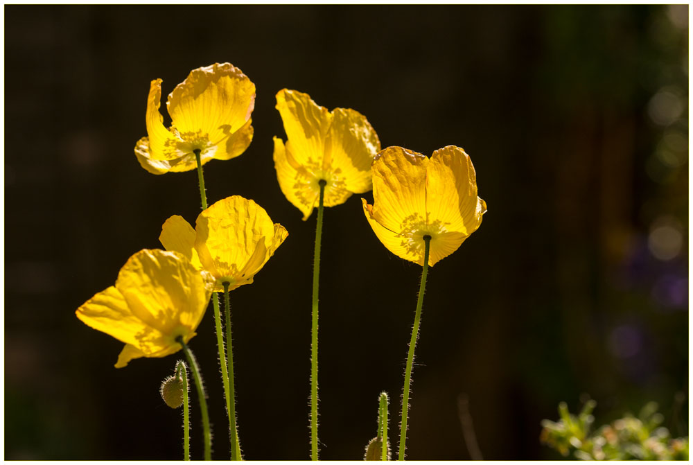 D7100_Sigma105_Flowers_10052017_DSC_0904
