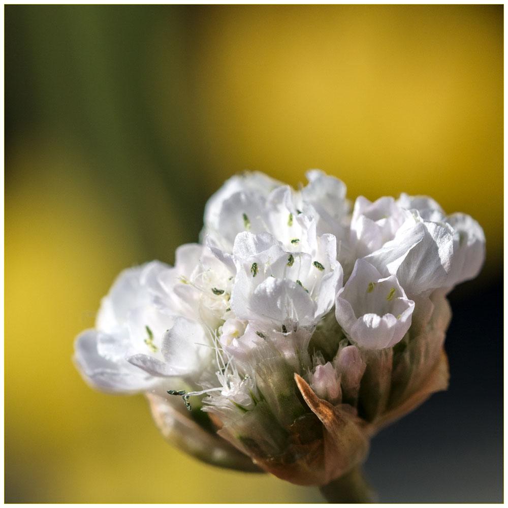 D7100_Sigma105_Flowers_10052017_DSC_0919