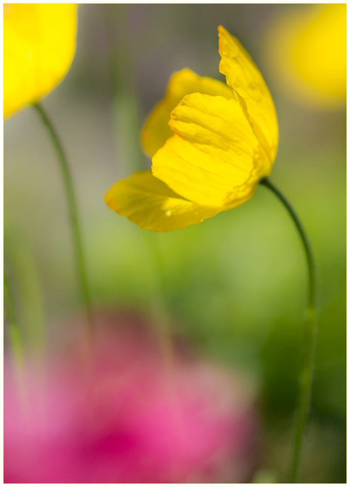 D7100_Sigma105_Flowers_10052017_DSC_0929