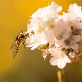 Garden-macro-DSC_1847