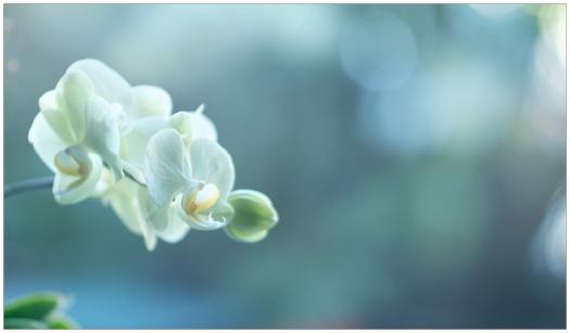 fbXT1_Samyang-85mm_ClassicChrome-from-RAW-DSCF3685