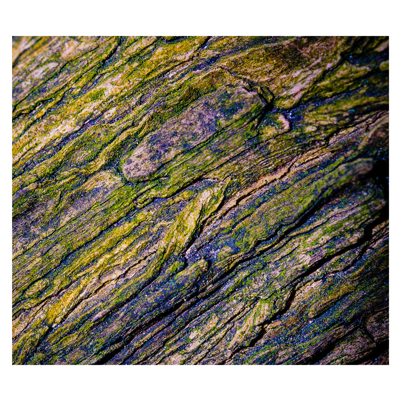 Tree bark - macro